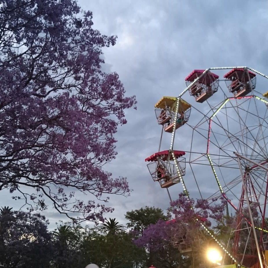 wooli-things-to-do-jacaranda-festival